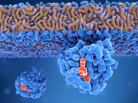 An activated Ras protein attached to a cell membrane.