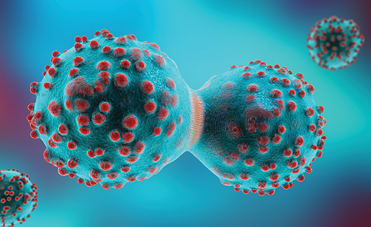 A three-dimensional illustration of a cancer cell in the process of mitosis.