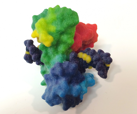 three-dimensional image of a topoisomerase break in over-twisted DNA