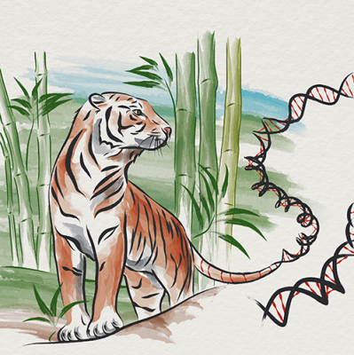 The Thailand Initiative in Genomics and Expression Research for Liver Cancer Consortium depicted as a tiger.