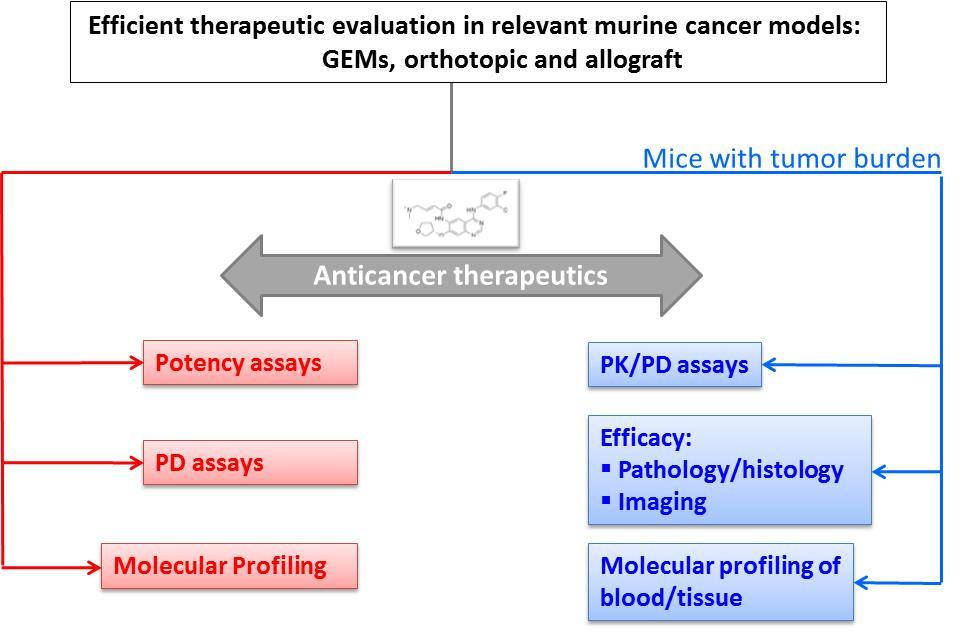 efficient therpeutic evaluation in relevant murine cancer models