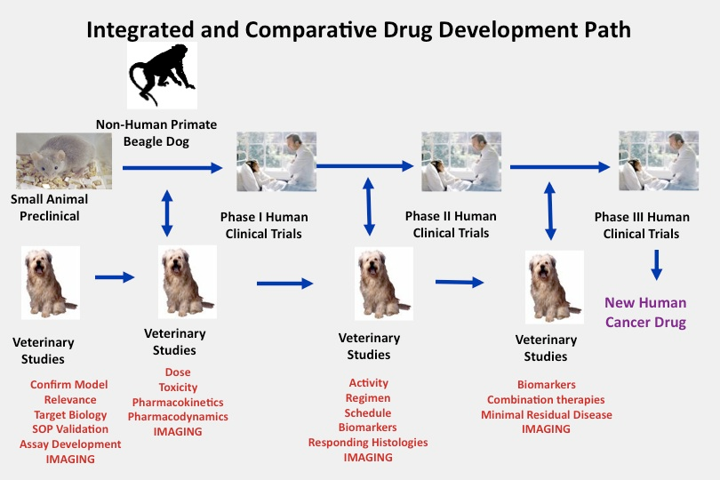 Integrated and Comparative Drug Development Path infographic.