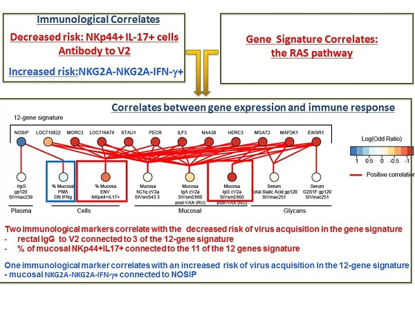 Correlation between vaccine-induced gene expression, immunological profiles, and decreased virus acquisition.
