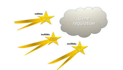 RNA types
