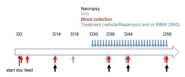Necropsy, MRI, and blood collection graphic