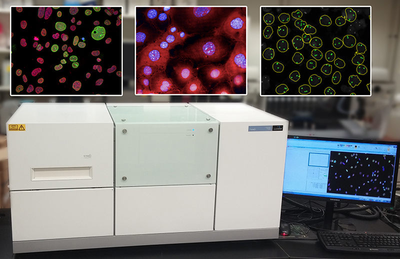 Image of High-throughput microscopes enable interrogation of a wide spectrum of intricate cellular features.