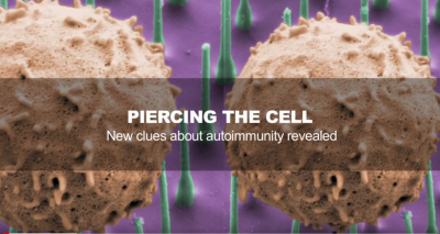 Piercing the Cell: New clues about autoimmunity reveaked