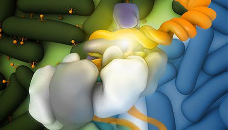 Cryo-EM CRISPR image